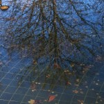 Branches in the Fountain